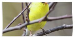 Beach Towel featuring the photograph American Goldfinch  by Ricky L Jones