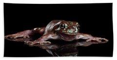 Australian Green Tree Frog, Or Litoria Caerulea Isolated Black Background Beach Towel