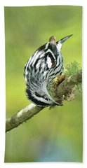 Black And White Warbler Beach Towel by Alan Lenk