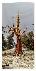 Bristlecone Pine Tree 1 Beach Sheet