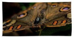 Beach Towel featuring the photograph Butterfly by Jay Stockhaus