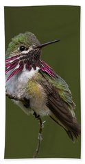 Calliope Hummingbird Beach Sheet
