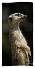 Meerkat Beach Towel by Craig Dingle