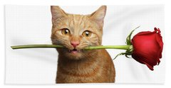 Portrait Of Ginger Cat Brought Rose As A Gift Beach Towel