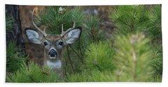 White Tailed Deer Calverton New York Beach Sheet