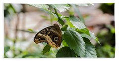 Owl Butterfly Beach Towel