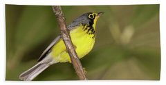 Canada Warbler Beach Sheet by Alan Lenk
