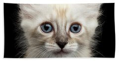 Cute American Curl Kitten With Twisted Ears Isolated Black Background Beach Sheet