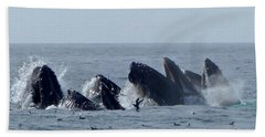 5 Humpbacks Lunge Feeding  Beach Towel