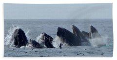5 Humpbacks Lunge Feeding  Beach Sheet