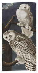 Snowy Owl Beach Towel by John James Audubon
