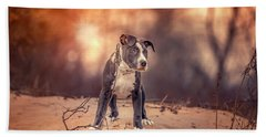 Beach Sheet featuring the photograph American Pitbull  by Peter Lakomy