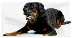 Rottweiler Dog Beach Sheet