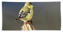 Lesser Goldfinch Beach Towel