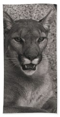 Mountain Lion  Beach Towel