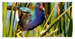 Purple Gallinule Beach Towel
