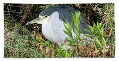 Beach Towel featuring the photograph Black-crowned Night Heron by Tam Ryan