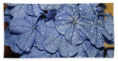 Blue Plumbago Beach Towel by Elvira Ladocki