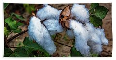 8 Bolls Of Cotton  Beach Towel