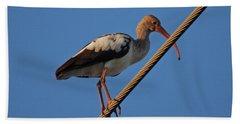 Beach Sheet featuring the photograph 8- Brown Ibis by Joseph Keane