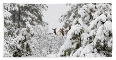 Elk In Deep Snow In The Pike National Forest Beach Towel