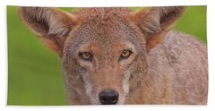 Coyote  Beach Towel