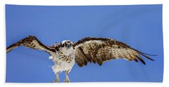 Osprey Beach Towel