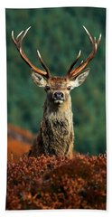 Red Deer Stag Beach Towel