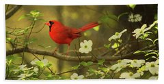 Beach Towel featuring the photograph A Cardinal And His Dogwood by Darren Fisher