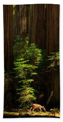 A Deer In The Redwoods Beach Towel by James Eddy