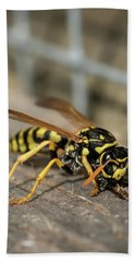 A European Paper Wasp Collecting Wood For Nest Beach Towel