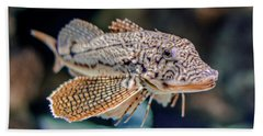 A Fishy Photo Beach Towel by Rob Sellers