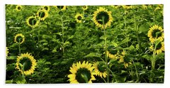 A Flock Of Blooming Sunflowers Beach Towel