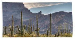 A Forest Of Saguaro Cacti Beach Towel