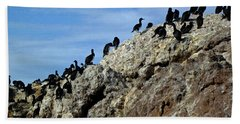A Gulp Of Cormorants Beach Towel by Sandy Taylor