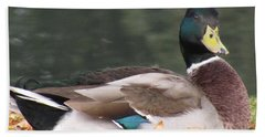 A Handsome Mallard Beach Towel