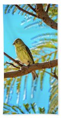 A Lesser Goldfinch Beach Towel