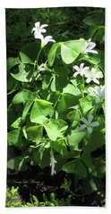 Beach Towel featuring the photograph A Lovely Spot For Shamrocks by Nancy Lee Moran