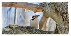 Beach Towel featuring the photograph A Male Downey Woodpecker  1111 by Michael Peychich