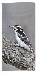 A Male Downey Woodpecker 1120 Beach Sheet by Michael Peychich