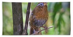 Beach Towel featuring the photograph A Melodious Thrush by Judy Kay