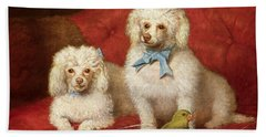 A Pair Of Poodles Beach Sheet by English School