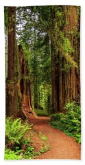Beach Towel featuring the photograph A Path Through The Redwoods by James Eddy