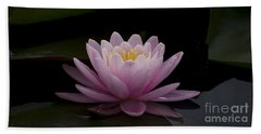 Beach Towel featuring the photograph A Perfect Bloom by Andrea Silies