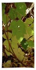 Beach Towel featuring the photograph A Plant's Various Colors Of Fall by DeeLon Merritt