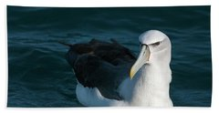A Portrait Of An Albatross Beach Towel