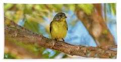 A Resting Lesser Goldfinch Beach Towel