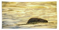 A Seal's Late Afternoon Swim Beach Sheet by Brian Caldwell