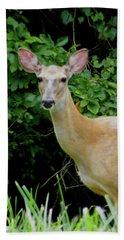 A Serious Deer Beach Sheet