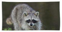 A Surprised Raccoon Beach Towel